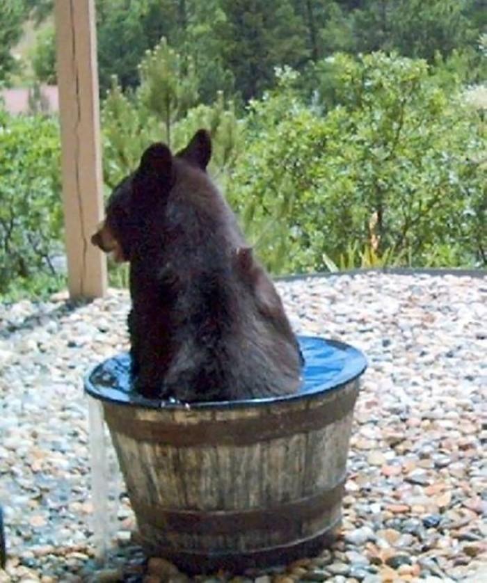 Water Barrel Bear (8)