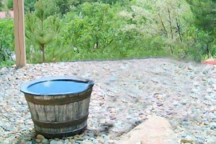 Water Barrel Bear