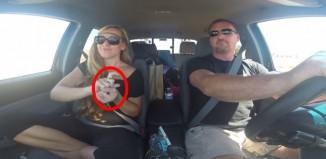 Car Deaf sign language