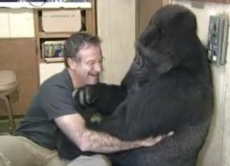 Robin Williams Gorilla