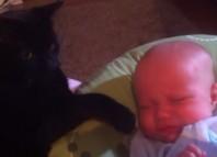 Baby and Kitten