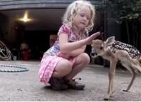 Deer and Kid