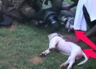 Dogs Smoke Inhalation