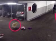The Killer Dog Scare Prank NormelTV