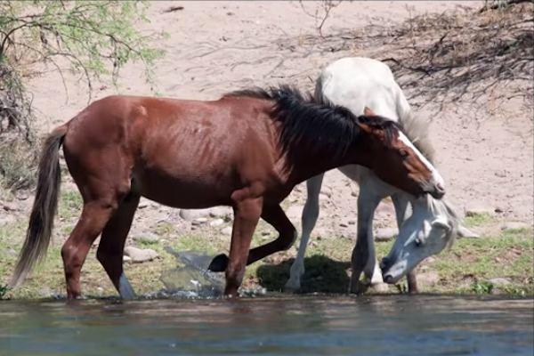 03-wild-horse-rescue