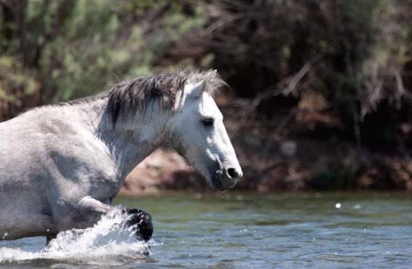 13-wild-horse-rescue (1)
