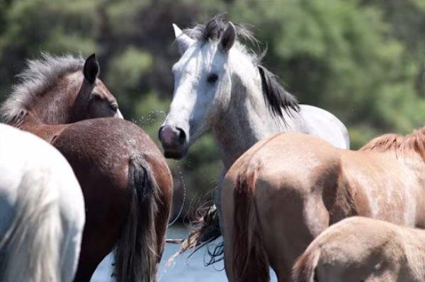 15-wild-horse-rescue