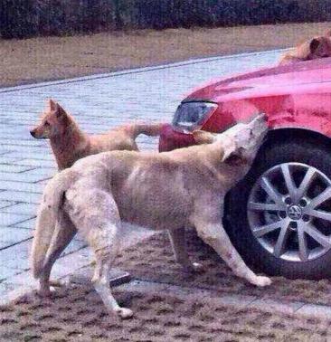 Dog-Revenge-3