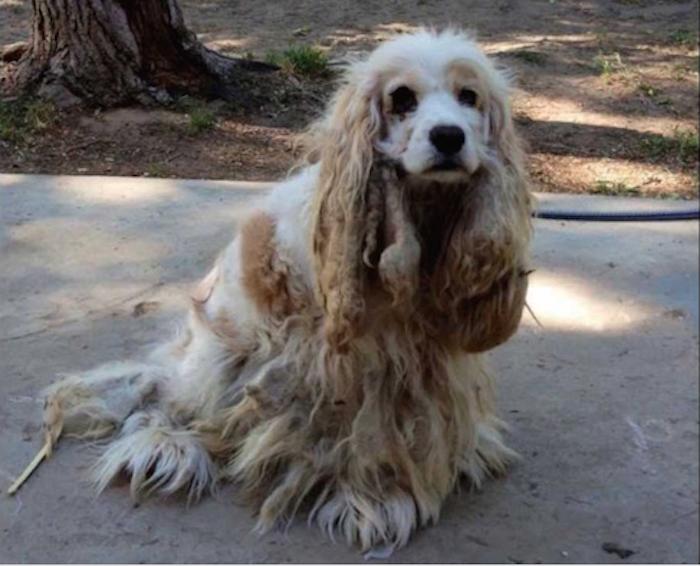dog main 1