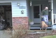 paraplegic dog