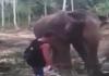 thug elephant