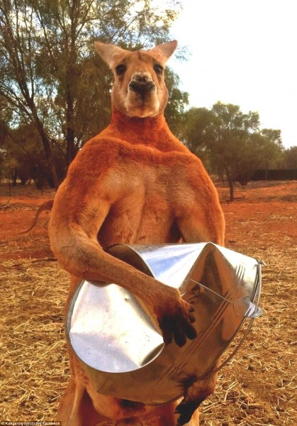 roger-the-kangaroo1
