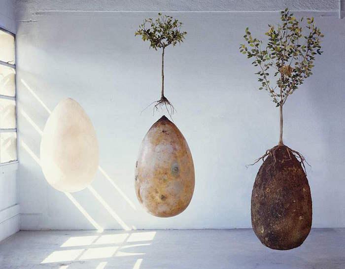 tree pod coffin 1