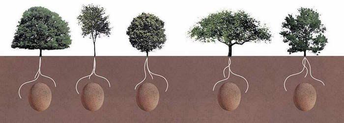 tree pod coffin 6