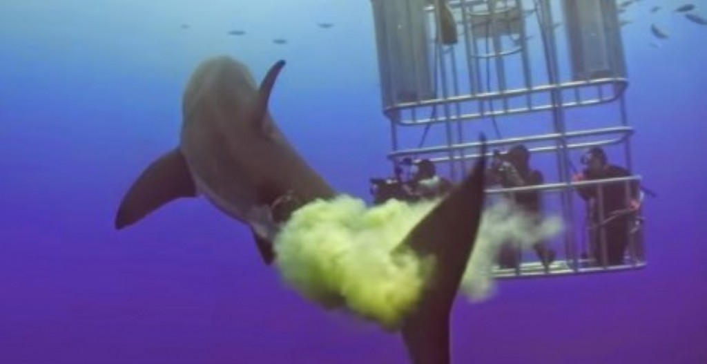 Great White Shark Takes Massive Poop While Swimming In The ...
