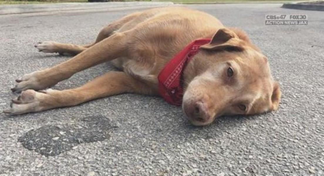 Dog mourns owner