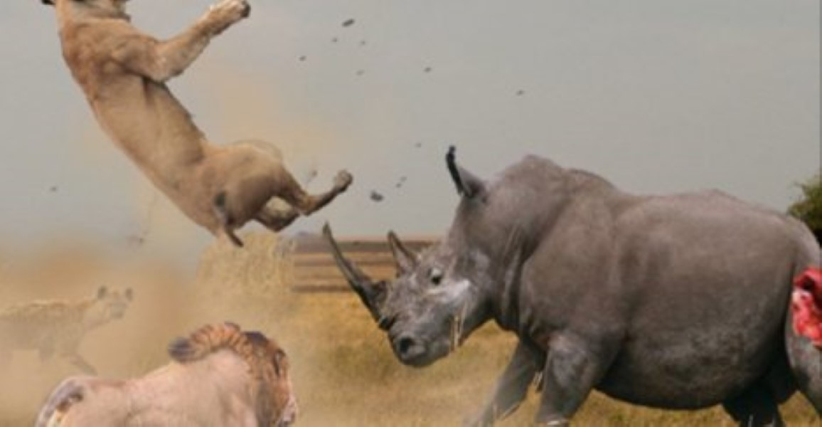 A Man And His Dog >> Mad Rhino Takes On A Pack Of Lions In a Battle That's Too Close To Call | BoredomBash