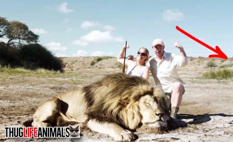 Revenge on Lion Poachers (1)