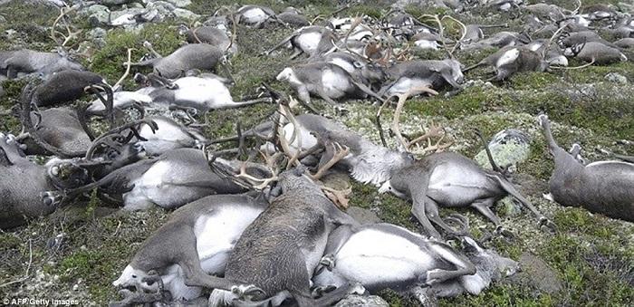 dead deers 3