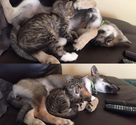 dog and cat friendship 3