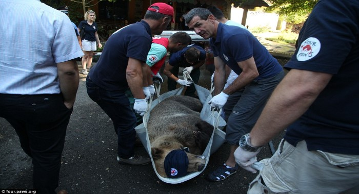 worlds saddest bear saved 2