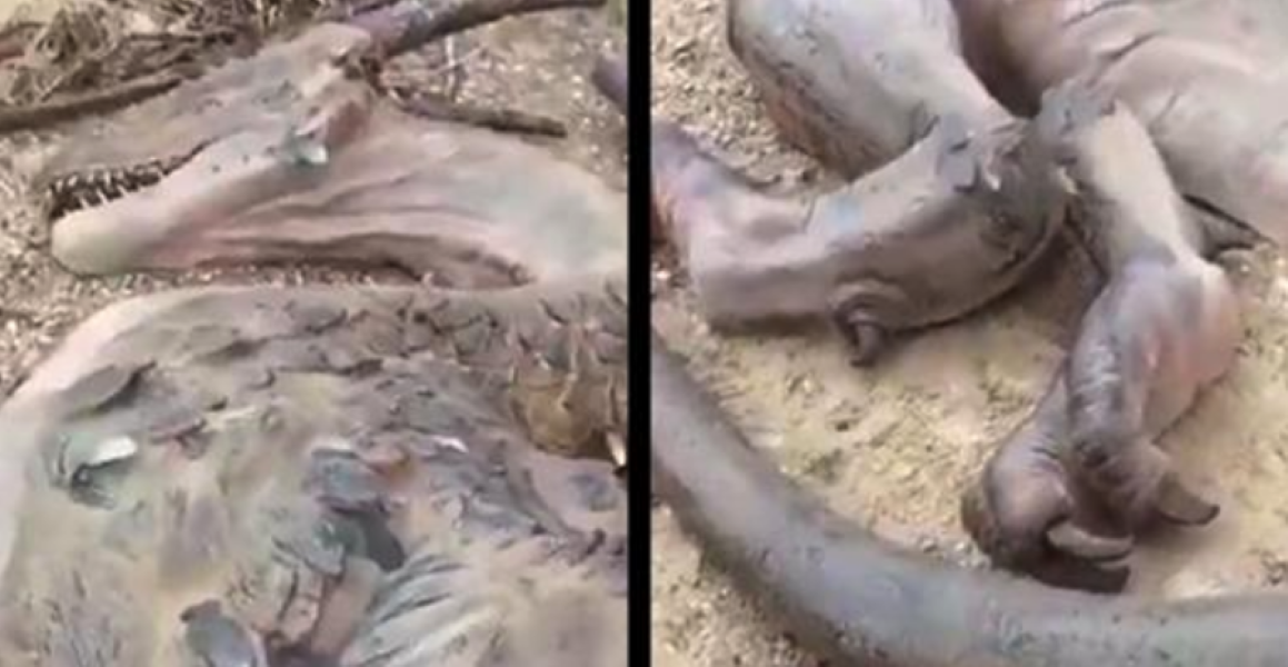 Man Claims To Have Found Dead Dragon On A Remote Island Boredombash