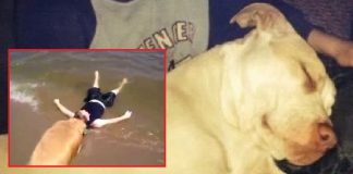 Dog Saves Boy From Drowning (1)