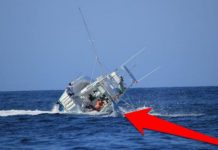 Marlin Topples Boat