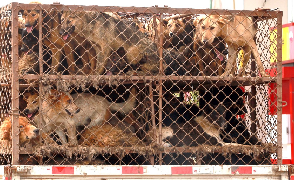 ban on eating cats and dogs Taiwan has moved to explicitly ban people from eating dogs and cats, after its parliament approved a bill to punish those who consume and sell the meat.