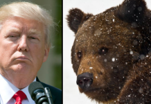 Trump Bears