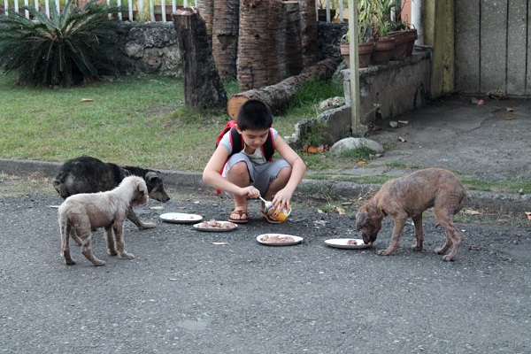 Boy Feeds Three Stay Dogs