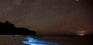 glowing plankton