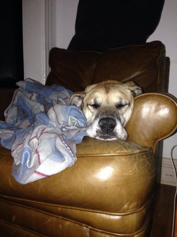 Porkchop dog chicago