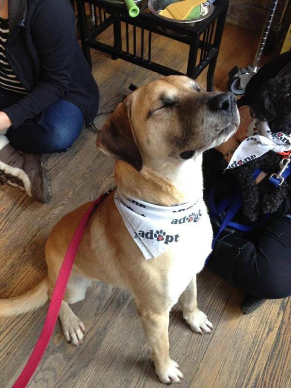 Porkchop dog cute adoption