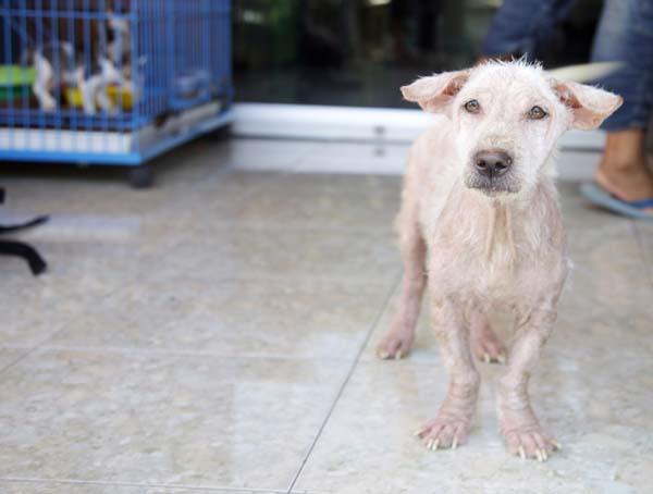 abandoned dog Bali