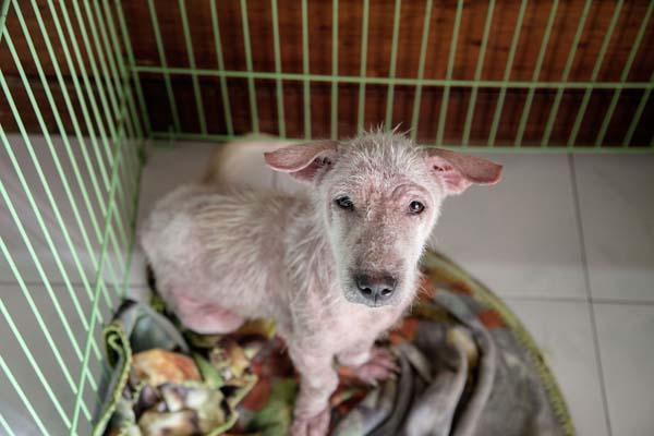 abandoned puppy Bali