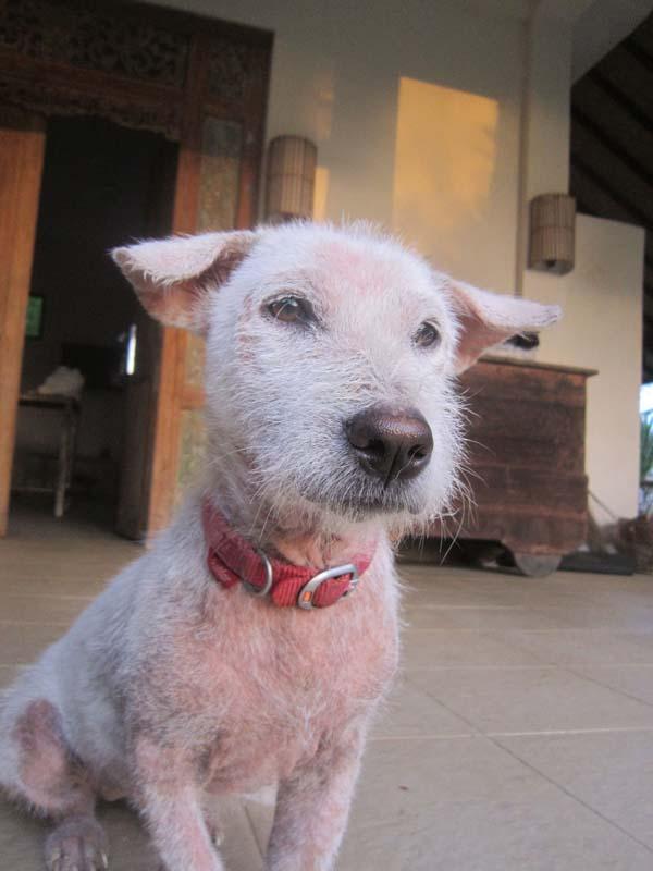 adopted dog Bali Ruby