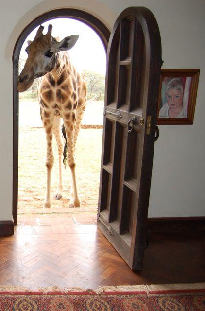 Giraffe at Home