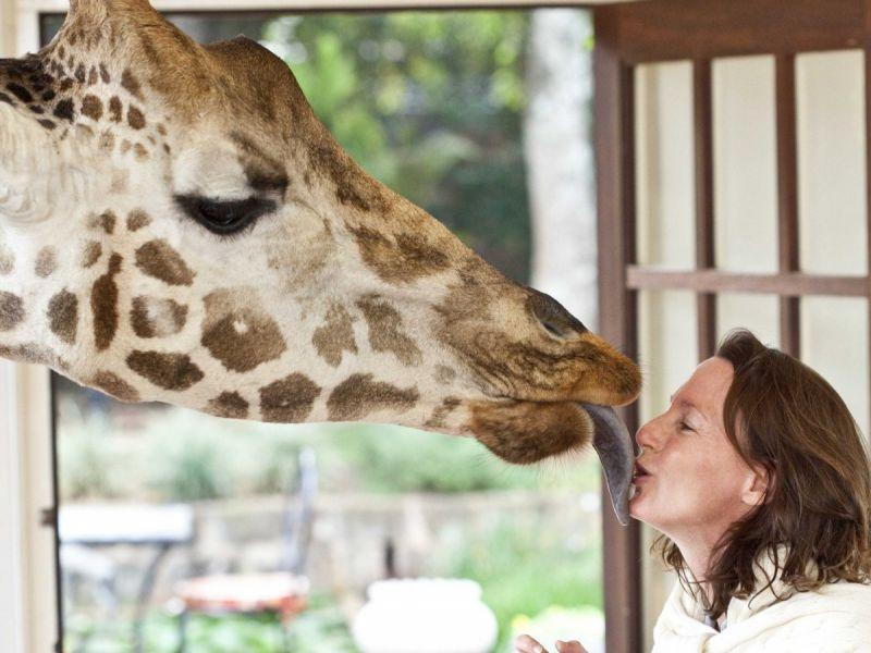 Safari Kisses