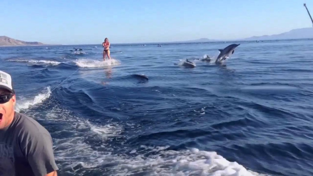 Wakeboarding with Dolphins