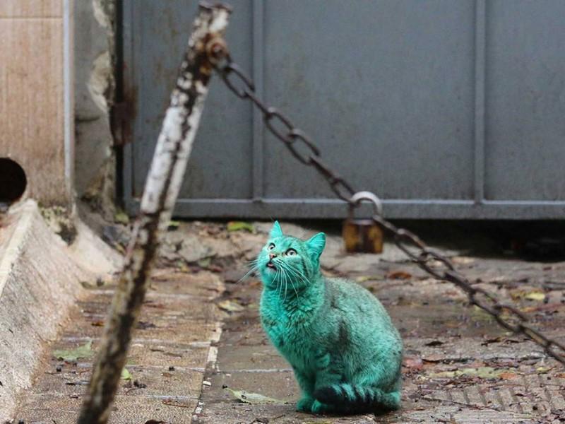 Cat Bulgaria