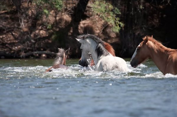 05-wild-horse-rescue
