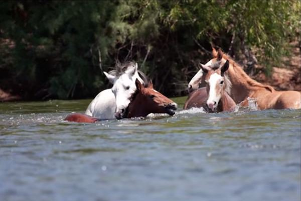 07-wild-horse-rescue