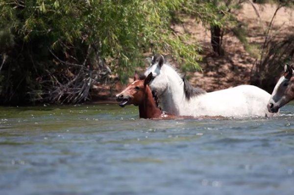 08-wild-horse-rescue