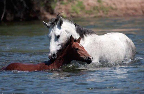 10-wild-horse-rescue