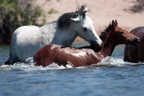 11-wild-horse-rescue