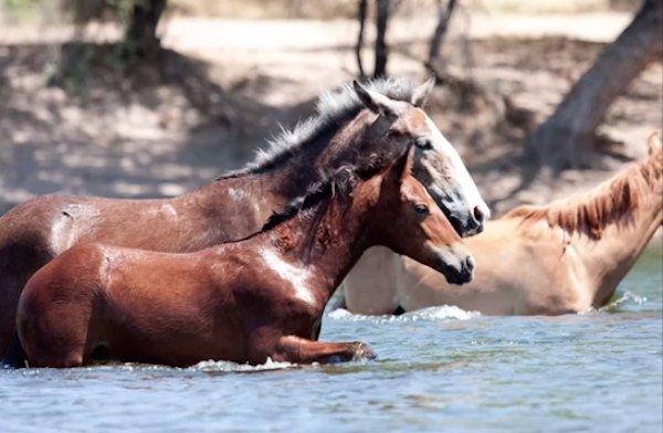 12-wild-horse-rescue