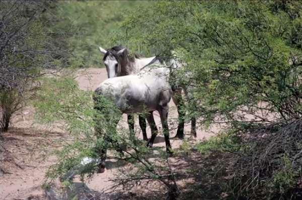 14-wild-horse-rescue (1)