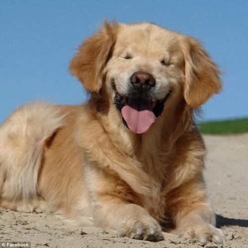 Blind Dog
