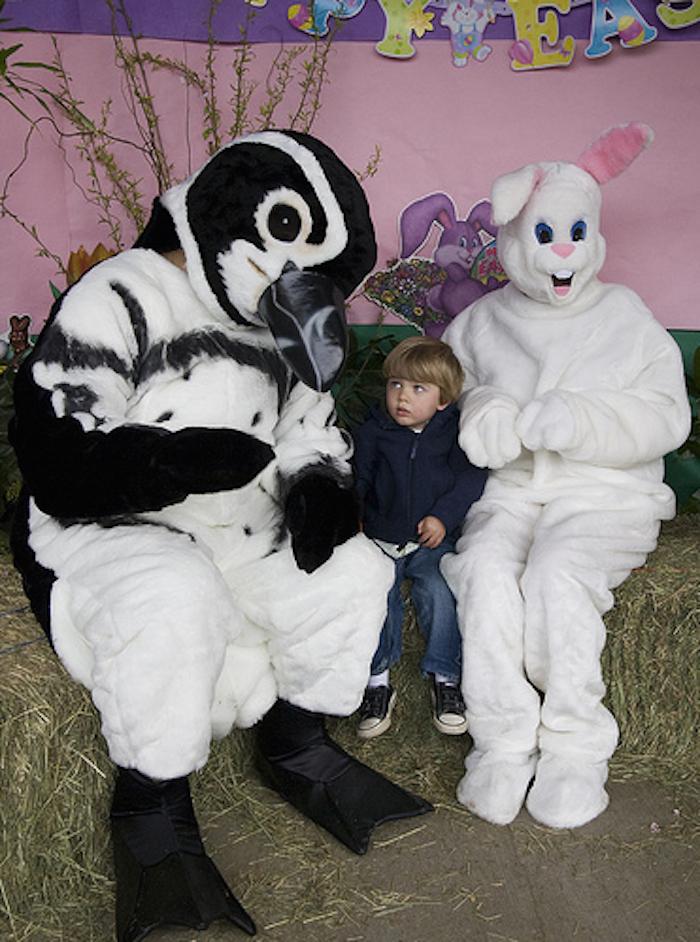 bunny 19